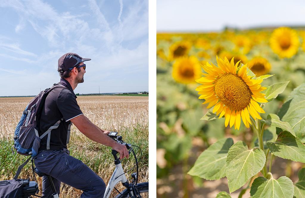 Champ de tournesols - Un week-end nature en Touraine