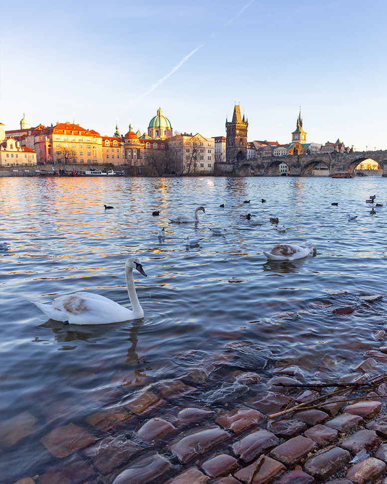 Plage aux cygnes avec vue sur le Pont Charles de Prague