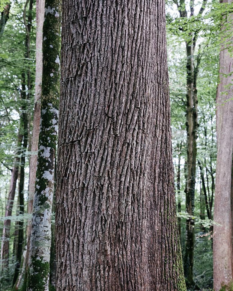 Forêt de Bercé - Vallée du Loir