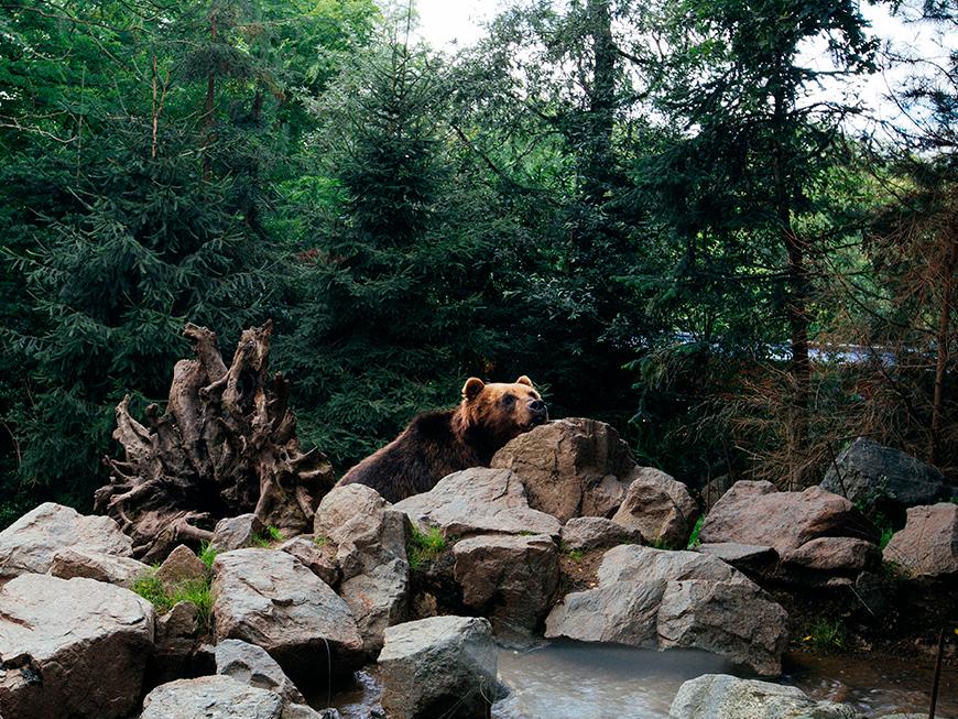 Safari Lodge du Zoo de la Flèche - Vallée du Loir